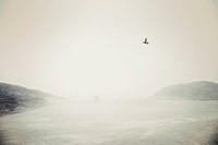 Bird and people on foggy beach, Tofino, Vancouver Island, Canada