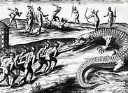 Crocodile hunting in Florida, engraving from a painting by Jacques le Moyne de Morgues (ca 1533-before 1588), from Peregrinationes, by Theodor de Bry ...