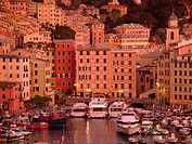 Liguria, Italy, Camogli, Riviera di Levante, Ligurian Riviera, Europe, Scenic view of the fishing port in the resort town of Camogli at sunset along t...