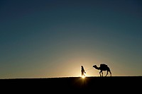 Silhouette of Berber 'Blue man' leading camel across sand dunes at dusk in Erg Chebbi near Merzouga; Sahara Desert, Morocco