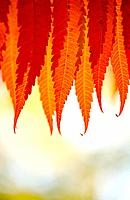 Branch of tree with autumn leaves. Selective focus, shallow DOF.