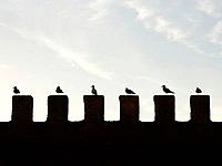 Morocco - seagulls resting on the city wall of Essaouira