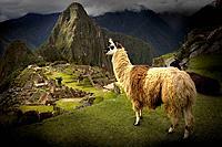 Machu Picchu Inca site.