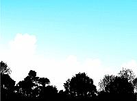 Woodland treetops