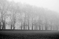 Misty field (black and white)