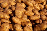 New potatoes (Solanum tuberosum)