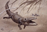 Paracyclotosaurus was a large prehistoric amphibian that lived during the Triassic period around 235 million years ago. It grew to over 2 metres in le...
