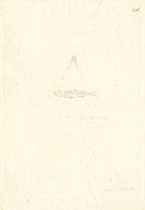 Ff. 236. Pencil sketch by George Forster made during Captain James Cook's second voyage to explore the southern continent (1772-75).