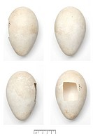 Egg specimens collected during the Terra Nova expedition to Antartica.