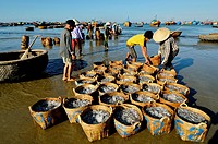 Vietnam, Mui Ne, unloading anchovy basket on the beach.