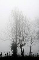 Landscape fog, La Bessière, Campuac, North Aveyron, Midi-Pyrénées, France.