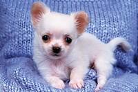 puppy,dogs,animals,animal