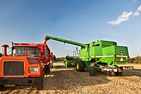 Combine transfers harvested soy beans.