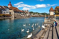 Tourists feed Swans at the riverbank of the Reuss River, Lucerne, Switzerland.
