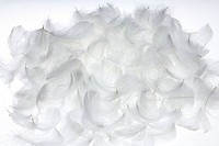 White feathers, white background