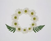 Wreath of white marguerites