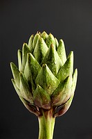 Artichoke extreme close_up
