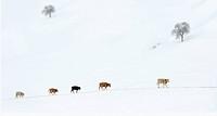 Inner Mongolia scenery