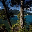 Chilean cedar (Austrocedrus chilensis), Lago Puelo National Park, Patagonia, Argentina.