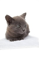 Cute grey kitten sitting on white towel