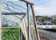 Hothouses, greenhouses in Hveragerdi in winter. They are heated by geothermal energy and supply a large part of the icelandic demand of vegetables lik...
