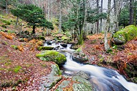 Sestil stream in Canencia birch. Sierra de Guadarrama. Madrid. Spain.