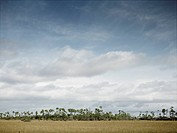 Landscape view of the Florida Everglades Prairie in mid-winter on a sunny day.