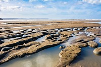 Clay and peat beds containing an ancient forest exposed on the beach at Westward Ho! shortly after the winter storms of 2014. North Devon, England.
