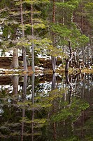 Scotland, Scottish Highlands, Cairngorms National Park. Native forest reflected upon the still loch waters of the Uath Lochans in Inshriach Forest nea...