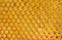 Honeycomb with a coating of red propolis