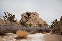 Rock Formation and Joshua trees