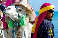 Africa, North Africa, Maghreb, South Tunisia, Governorat of Medenine. Djerba island. Beach of Sidi Mehres, camel and camel driver.