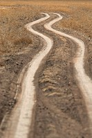 Dirt road in Masai Mara.