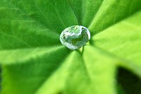 Close up of water droplet on leaf.