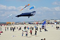 Wind festival of Berck-sur-Mer in the north of France.