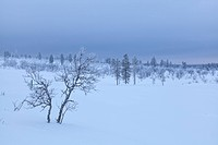 Trees, Europe, Finland, Kiilopää, scenery, landscape, Lapland, light mood, snow, Urho Kekkonen, national park, winter
