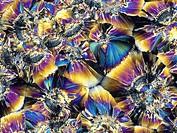 Folic acid. Polarised light micrograph of crystals of folic acid (folacin), a member of the vitamin B complex. Folic acid has been shown to reduce the...