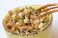 Sprouts mixture, lentils, mungbeans and chickpeas