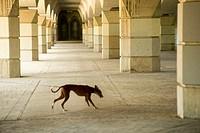 Photographs of the underside of the bridge United, Valencia, Spain
