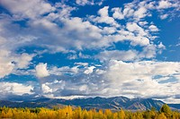 Scenic View Of The Chugach Mountains East Of Anchorage With Autumn Foliage In The Foreground, Southcentral Alaska