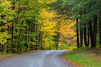 Road curving though fall colors in woods in Chestnut Ridge Park in New York State.