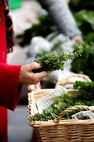Organic Market, Sydney