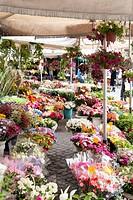 campo de' fiori, market, rome