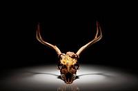USA, Arizona, Pheonix, Ornamented deer skull