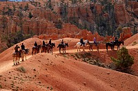 United States, Utah, Bryce Canyon National Park, horse trekkers near Queen's Garden Trail through hoodoos