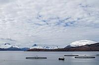 Die norwegische Aquakultur basiert oft auf Netzgehegen im freien Meer oder in Buchten und dient vor allem der Züchtung von Lachsen