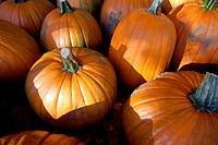 Pumpkins for sale.