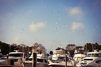 Seagulls Over Docks