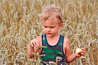 Young boy with apple on a field of wheat