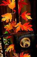 Fall leaves on iron gate